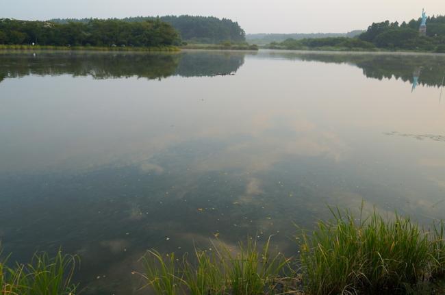 いちょう公園の池