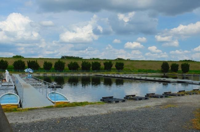 鳥羽井沼管理釣り場